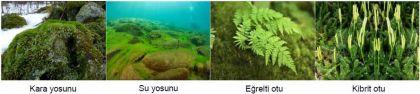 Çiçeksiz Bitkilere Örnekler-1
