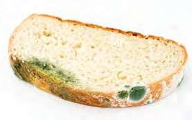 Ekmekte Küf Mantarı 3