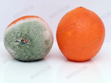 Portakalda Küf Mantarı