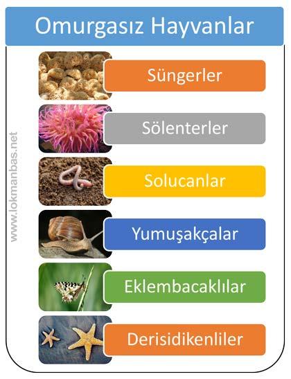Omurgasız hayvanlar altı gruba ayrılır