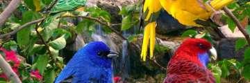 Dünyada En Çok Bulunan Kuş Türü Hangisi?