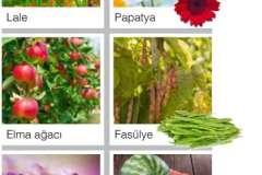 Çiçekli Bitkiler